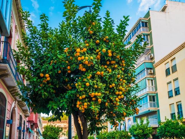 Vue sur l'arbre de mandarine dans un ciel bleu.