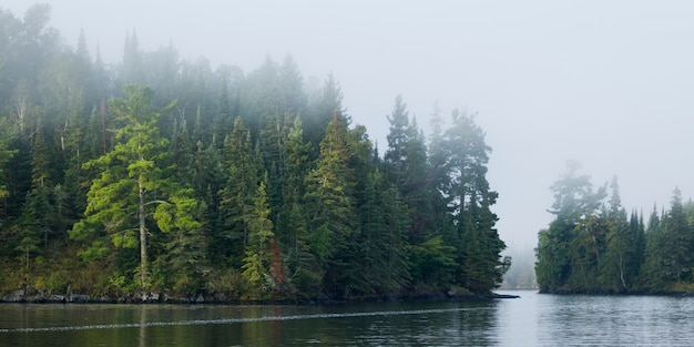 Vue des arbres au bord du lac, kenora, lac des bois, ontario, canada