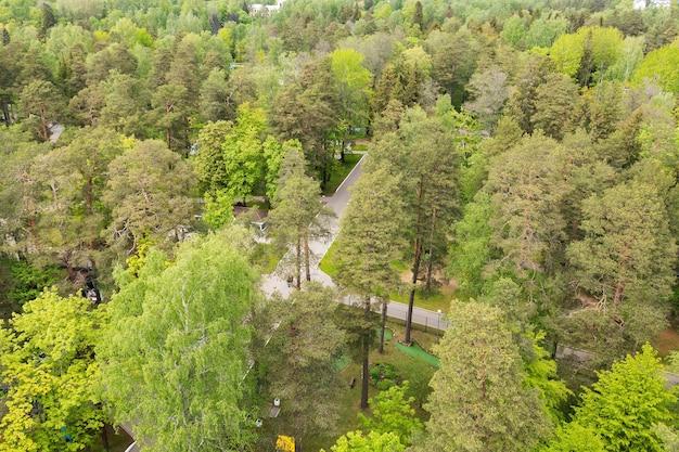 Vue sur les arbres du parc verdoyant d'en haut.