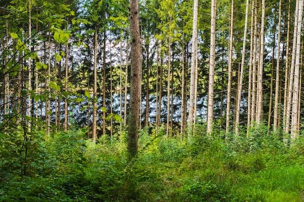 Vue, arbres, intérieur forêt