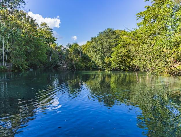 Vue d'arbres verts se reflétant sur une rivière avec un ciel bleu