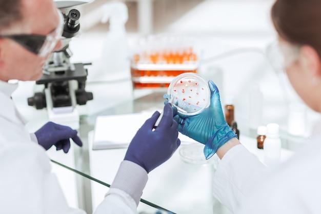 Vue arrière. boîte de pétri entre les mains de scientifiques virologues. science et santé.