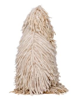 Vue arrière du caniche standard avec fil blanc. portrait de chien isolé