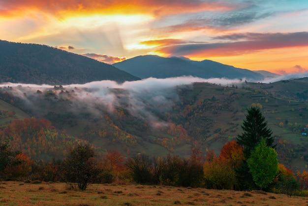 Vue de l'aube à couper le souffle dans la forêt de conifères
