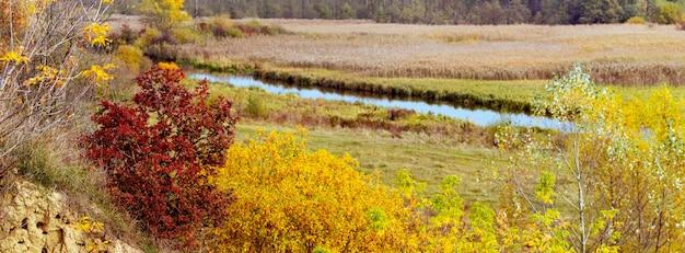 Vue d'automne avec un acajou au bord de la rivière parmi la végétation d'automne dorée. paysage d'automne pittoresque