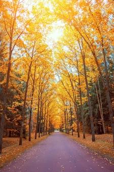 Vue d'automne d'une allée de chênes avec une lumière vive au-dessus des couronnes d'un sentier et de bancs.