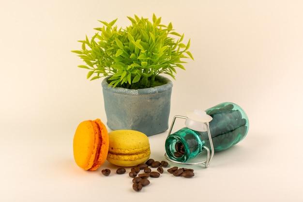 Une vue avant pot avec macarons français café et plante verte sur la surface rose