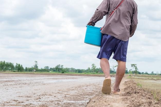 Vue en bas du vieux fermier avec seau bleu marchant à la ferme de riz
