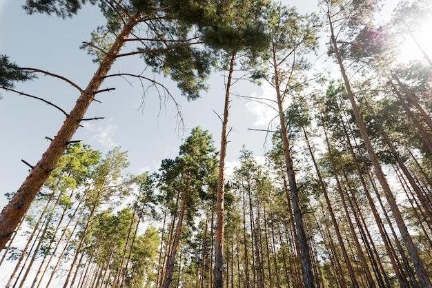 Vue basse des arbres à la lumière du jour