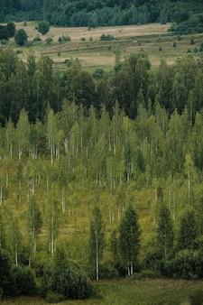 Vue d'une belle forêt rare de loin d'une hauteur