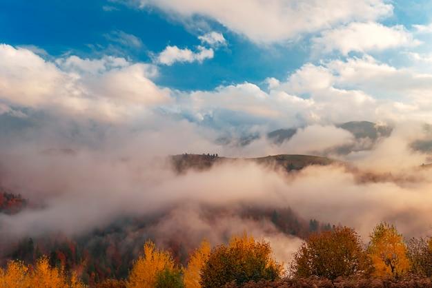 Vue de belles collines entourées d'un épais brouillard
