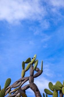 Vue sur les cactus sous le ciel bleu