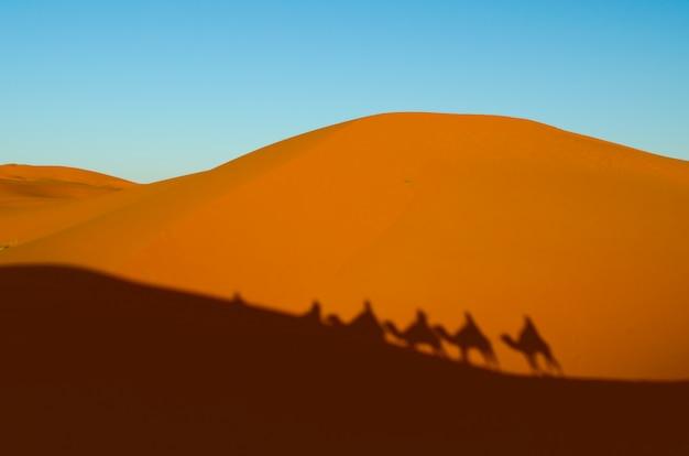 Vue de caravane voyageant et chameaux ombres sur la dune de sable dans le désert du sahara
