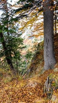 Vue de la carrière de pierre de lespezi, roumanie, jour de l'automne