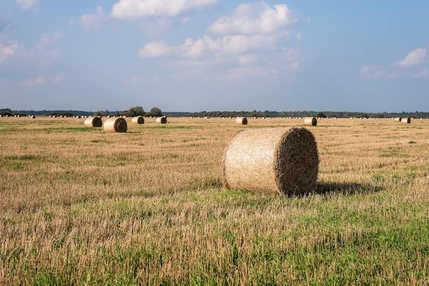 Vue d'un champ agricole avec des balles de foin sur une journée ensoleillée.