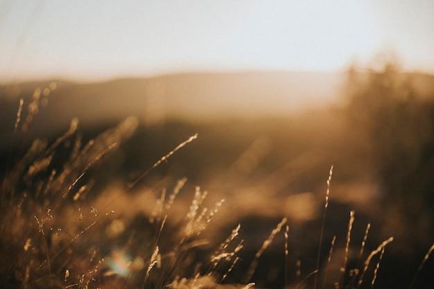 Vue d'un champ d'herbe brune