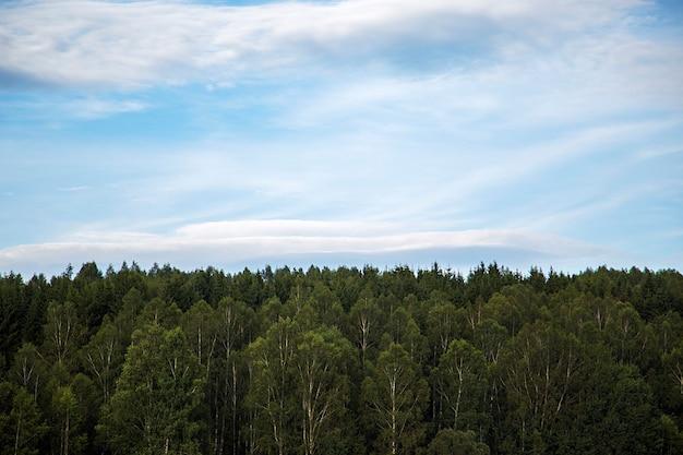Vue sur la cime des arbres sur le lac vlasina en serbie