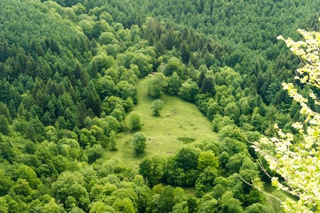 Vue d'une clairière au milieu d'une forêt, asturies