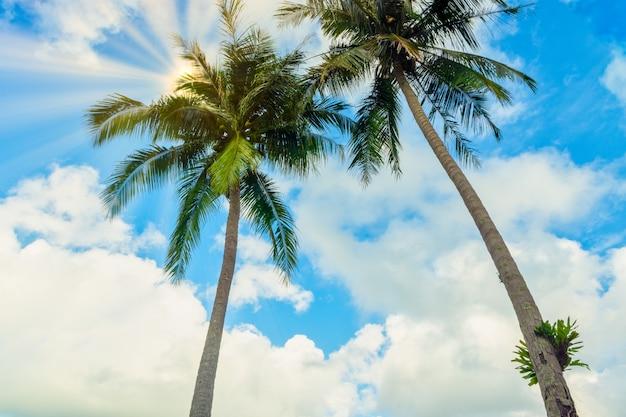 Vue des cocotiers et de la mer sur koh chang