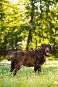 Vue de côté d'un chien mignon dans le parc