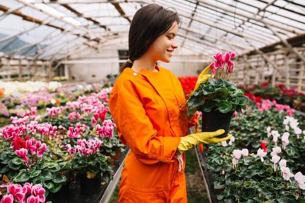 Vue de côté d'un jardinier femelle heureux en regardant pot de fleur rose