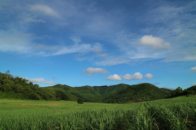 Vue côté pays avec la canne à sucre dans les champs de canne à sucre avec surface de montagne