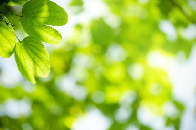 Vue de la couleur naturelle des feuilles vertes sous le soleil. concept de la nature.
