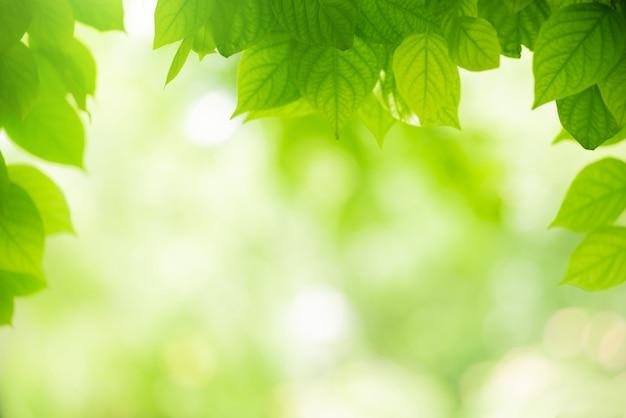 Vue de la couleur naturelle des feuilles vertes sous le soleil. fond de concept de nature