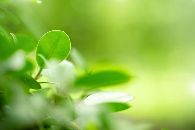 Vue de la couleur naturelle des feuilles vertes sous le soleil