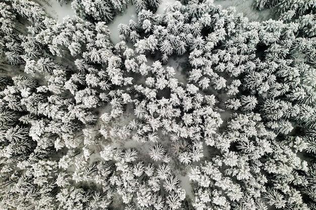 Vue depuis la hauteur de la forêt d'hiver avec des arbres enneigés en hiver.