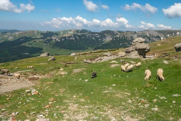 Vue, depuis, montagnes bucegi, roumanie, parc national bucegi