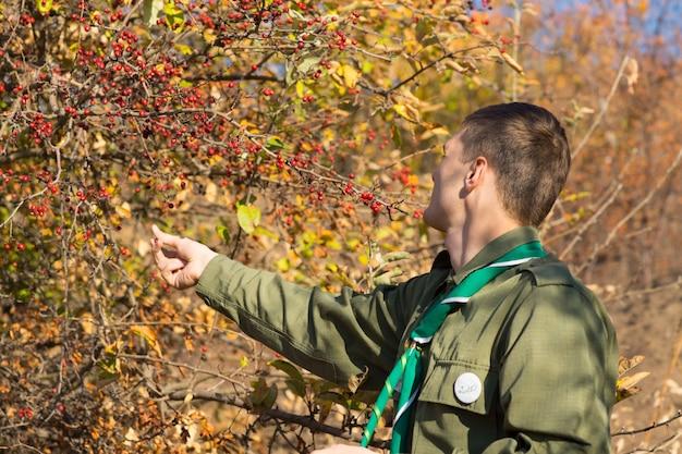 Vue de derrière d'un jeune scout ramassant des baies rouges d'un buisson avec un feuillage d'automne ou d'automne jaune coloré