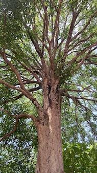 Vue de dessous de l'arbre