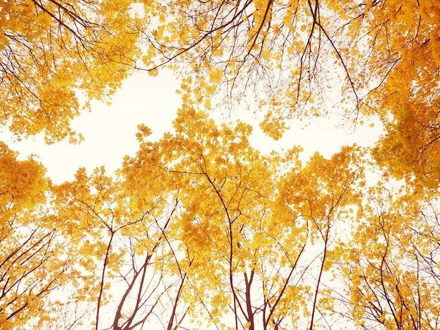 Vue de dessous des branches d'arbres d'automne, beau fond de la carte, le concept de l'automne et le confort