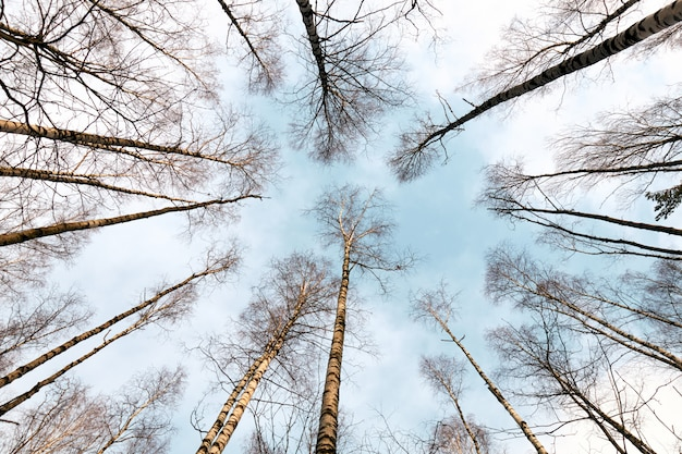 Vue de dessous du ciel dans la forêt