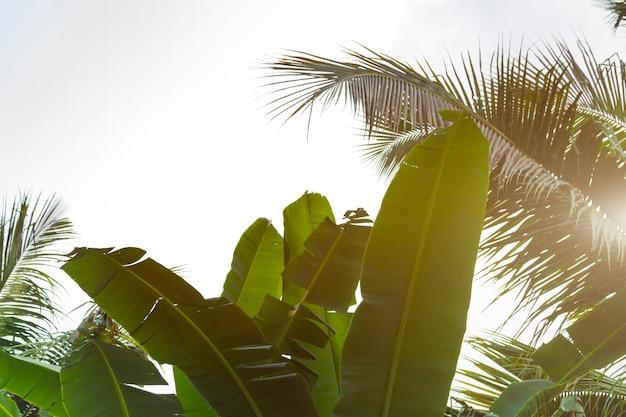 Vue de dessous des feuilles de cocotiers et de bananes
