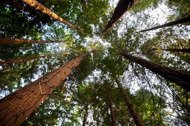 Vue de dessous de grands arbres d'une forêt