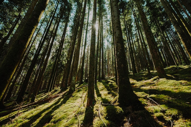 Vue de dessous d'un groupe d'arbres