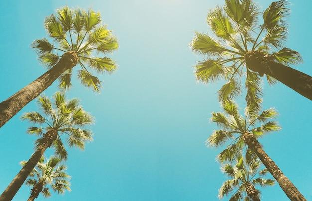 Vue de dessous de la rangée de palmiers sur fond de ciel bleu. cadre tropical avec espace de copie