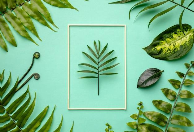 Vue de dessus arrangement de feuilles vertes avec cadre vide