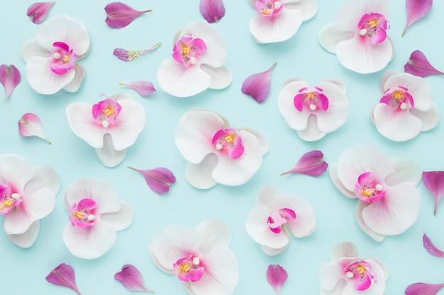 Vue de dessus arrangement d'orchidées roses