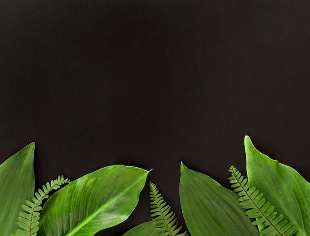 Vue de dessus de l'assortiment de feuilles avec espace copie