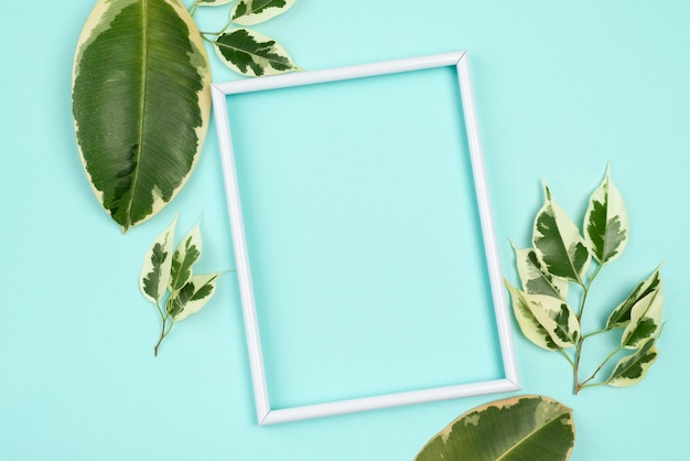 Vue de dessus de l'assortiment de feuilles de plantes avec cadre