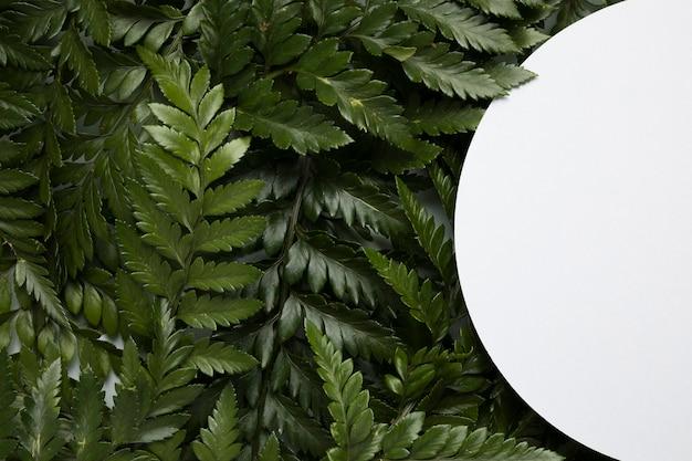 Vue de dessus assortiment de feuilles vertes avec cadre