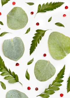 Vue de dessus assortiment de feuilles vertes
