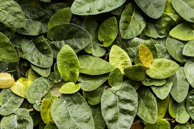 Vue de dessus de l'assortiment de feuilles