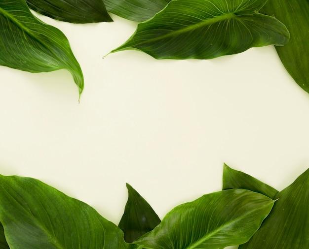 Vue de dessus de beaucoup de feuilles avec espace copie