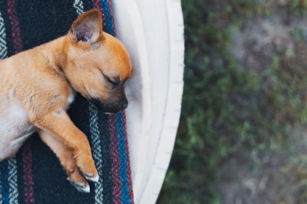 Vue de dessus bébé chien rouge dormant à l'extérieur.
