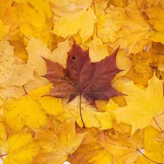Vue de dessus sur le bel automne lumineux coloré allongé sur une table en bois