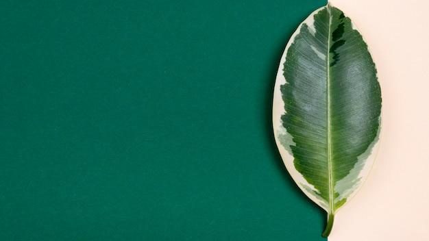 Vue de dessus de la belle feuille de plante avec espace copie